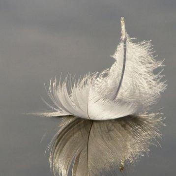 Significado de las plumas de Ángel según su color